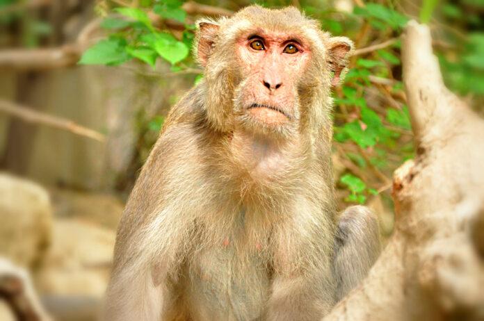 Monkeys Practicing Social Distancing