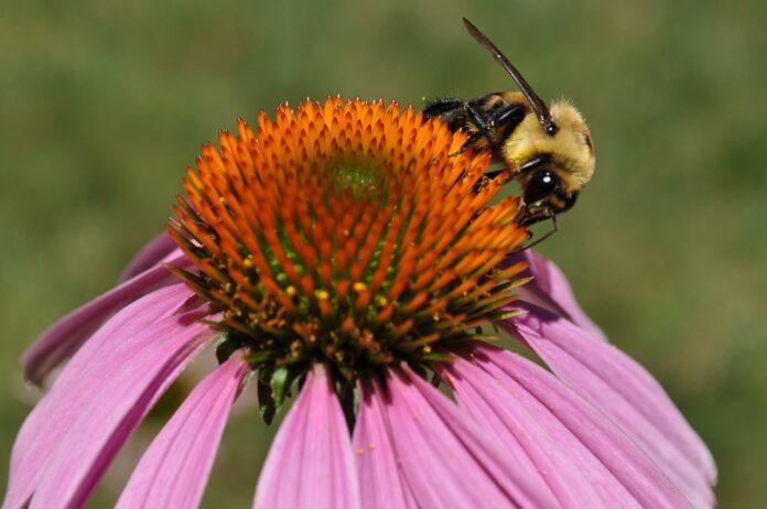 Myths on Summer Allergies