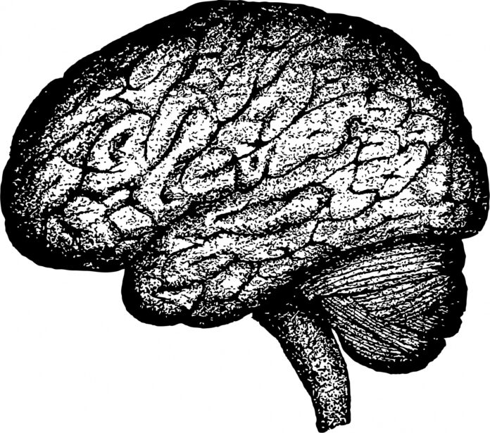 Sex-based Differences in the Human Brain