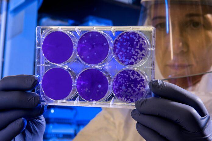 coronavirus immunity