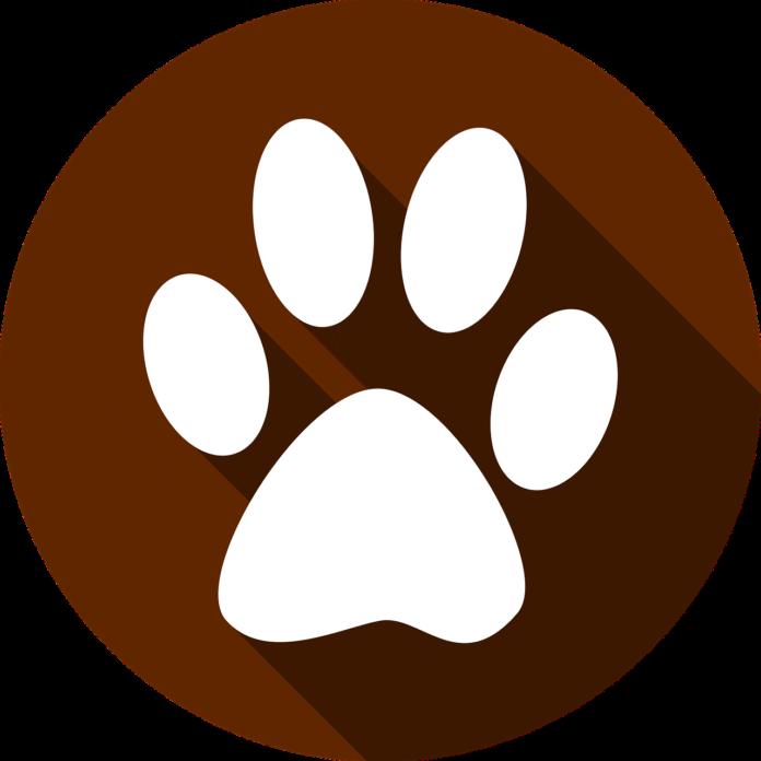 green fur puppy