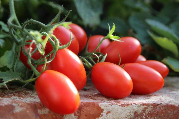 Ariana Grande tomato allergy