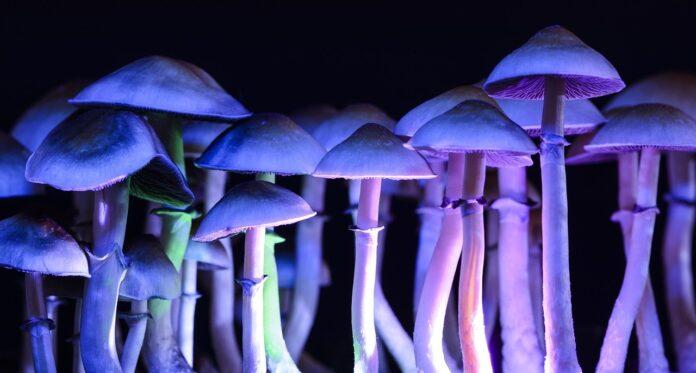 magic mushrooms legal