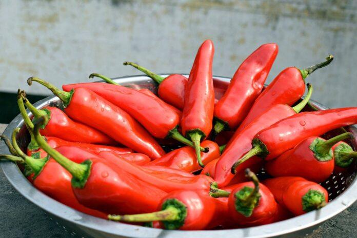 chili pepper aging